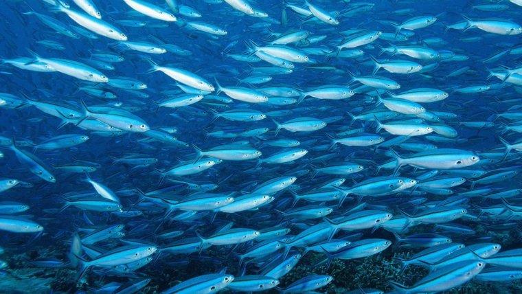 WWF Sustainable Seafood Week Hong Kong 2018