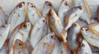 WWF Hong Kong Sustainable Seafood Week - featured image