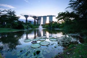 Gardens by the Bay_credits to Marklin Ang